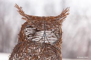 owl_Eben